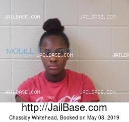 Chassidy Whitehead mugshot picture